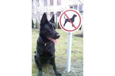 prekybos juodaisiais šunimis sistema