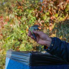 Ornitologai klaipėdiečiams padėjo suprasti paukščių migraciją