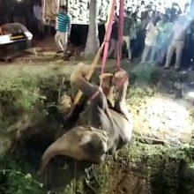 Indijoje iš gilaus šulinio iškeltas laukinis dramblys