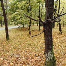Apklausa baigiasi: paaiškės, ar kirs Girulių mišką