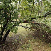Pratęstas apklausos dėl Girulių miško terminas: suteikė paskutinę galimybę pareikšti nuomonę