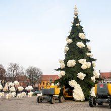 Oficialiai pristatyta Kauno eglutė: prasideda jaukių Kalėdų laukimas
