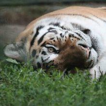 Lietuvos zoologijos sodas kviečia į 83-iąjį gimtadienį: pristatys rekonstrukcijos projektą