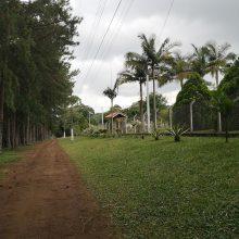 Pastangos: netoli San Paulo esantis miestelis Lituanika turėjo būti lietuviškumo sala Brazilijoje, tačiau jų vaikai šio sumanymo nebepuoselėjo.