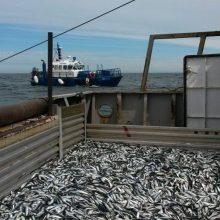 Menkių žvejybos kvotos – tik gyvybei palaikyti