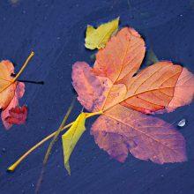 Orai: lauke gražu nebus – teks kęsti rudens žvarbą