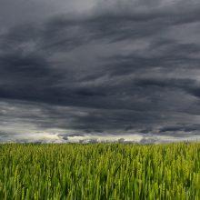 Gavome lietaus porciją: stichinė sausra pasitraukė iš visų rajonų