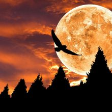 Astrologinė prognozė birželio 8–14 d.