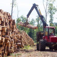 Ministerija nepritaria siūlymui mažinti valstybinių miškų kirtimo normą