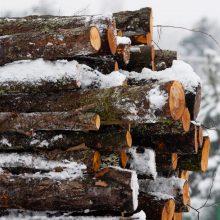Gyventojai pritaria miškų kirtimų ribojimui, bet nemokėtų už jų išsaugojimą