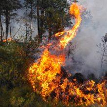 Miškininkai antrą dieną gesina miškus šalia Trakų – įtariami padegimai