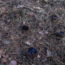 Neries regioniniame parke aptiko itin retą grybą