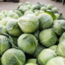 Lietuviai ištikimi kopūstams: rudenį – tai viena populiariausių daržovių