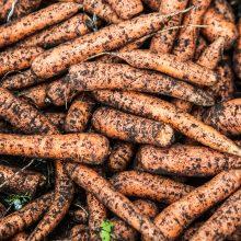 Kas brangs: sausra didžiausią žalą padarė bulvėms, svogūnams ir kopūstams