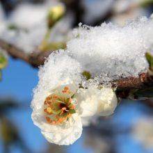 Šį pavasarį – sausra ir šalnos: kokius nuostolius patyrė žemdirbiai?