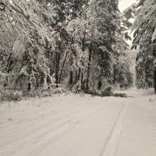 Miškininkai įspėja: šiomis dienomis pasivaikščiojimus miške verčiau atidėti