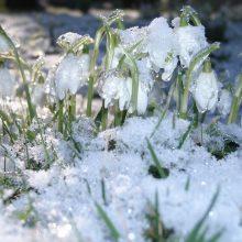 Pavasarinę kovo nuotaiką sujauks žiemiški orai