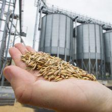 Grūdų derlius šiemet rekordinis, bet prastesnės kokybės