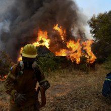 Graikijoje tęsiantis karščio bangai, gaisras Rodo saloje tapo nekontroliuojamas