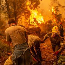 Didelės pajėgos Graikijoje mėgina užgesinti miškų gaisrus