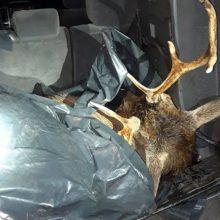 Policija pratęsė patikrinimą dėl neteisėtai nušautą elnią vežusio pareigūno