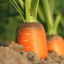 Siūloma skirti 2 mln. eurų pagalbą su sunkumais susiduriantiems daržovių augintojams