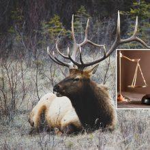 Bus teisiamas įrašus apie daugiau nei 90 nušautų gyvūnų iš medžioklės lapų ištrynęs vyras