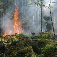ES subūrė lėktuvų grupę: kovos su miškų gaisrais