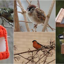 Lesinti ar ne paukščius žiemą?