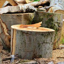 Policija sulaikė Šiaulių bulvare prie kertamo medžio prisirakinusią moterį