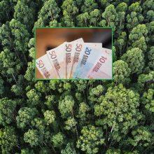 Valstybinių miškų urėdija pirmą pusmetį uždirbo rekordinį pelną