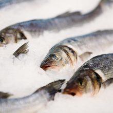 Pataria, į ką atkreipti dėmesį perkant šviežią žuvį