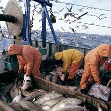 Menkių žvejybos draudimą rengiamasi įvesti ilgam