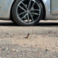 Kaunietis įspėja: IX forto automobilių aikštelė pasitinka aštriai