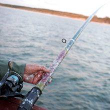 """""""Lašiša 2020"""": nepamirškite žvejo mėgėjo kortelės"""