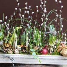 Įvairovė: imbiero šaknis, svogūno galvutė, putpelių kiaušinukai sudaro stilingą draugiją gėlėms, o permatomuose stiklo induose įkurdintos kompozicijos leidžia stebėti ir požeminį augalų gyvenimą.