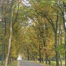 """Plečiamas """"Natura 2000"""" tinklas, bus saugomas niūriaspalvis auksavabalis"""