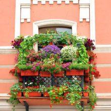Svyrančių augalų girliandos – spalvinga puošmena