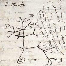 Iš Kembridžo universiteto dingo Ch. Darwino užrašai: manoma, kad juos pavogė