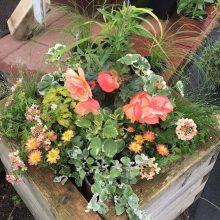 Vazonuose – žiedų ir žalumos oazės