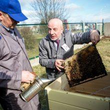 Pavasariniai bitininkų darbai darbeliai