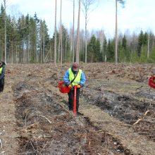 Į miškus iškeliauja 30 milijonų medelių: įsibėgėja miškasodžio darbai