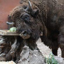 Artėjantį savaitgalį – trys progos pažinti gyvūnus Lietuvos zoologijos sode