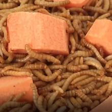 Vabzdžius augina ir lietuviai: ar šie gyviai pakeis mėsą?