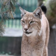 Lietuvos zoologijos sodas – biologinės įvairovės išsaugojimo ir švietimo dalis