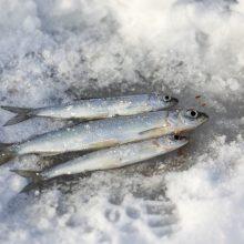 Aplinkosaugininkai: šalti orai kelia pavojų užšalusių vandens telkinių žuvims