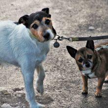 Šuns nepaklusnumas vedžiojant: kaip išvengti augintinio agresijos prieš kitus keturkojus?