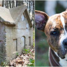 Minima Šuns diena: jei šunį spardysi, tai numiręs laižysi karštų smalų