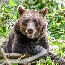Sušvelnintas pagrindinis nykstančių rūšių apsaugos įstatymas: kas pasikeitė?