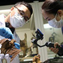 Kinija: Uhano laboratorijoje yra trys šikšnosparnių koronavirusai